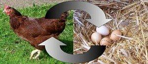 330px-Chickenegg (1)