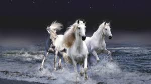 chevaux qui courent